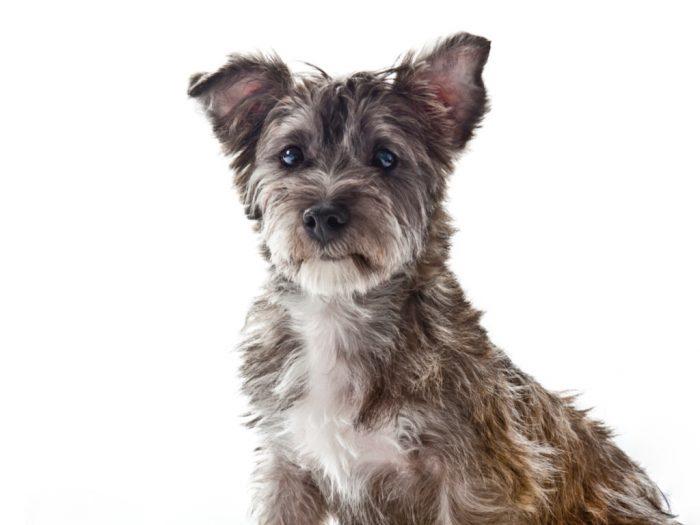 Little Dog Symbolizing Underdog